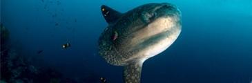bali-nusa-lembongan