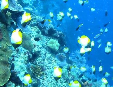 diving bunaken